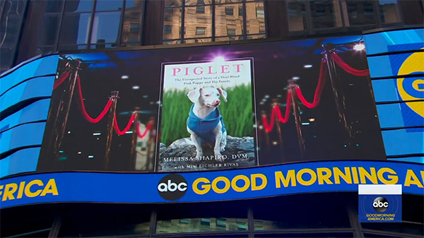 Piglet on Good Morning America