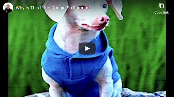 The Most Heartwarming Dog Story